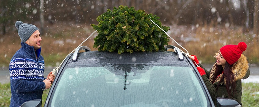 Couple Strapping Tree to a Car