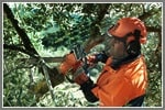 How to Pick the Perfect Electric Chain Saw